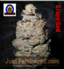 Next Generation Grapegod Regular 5 Ganja Seeds